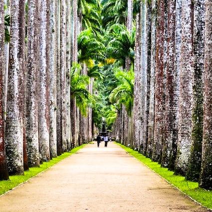 Jardim Botânico, dove Rio incontra la natura
