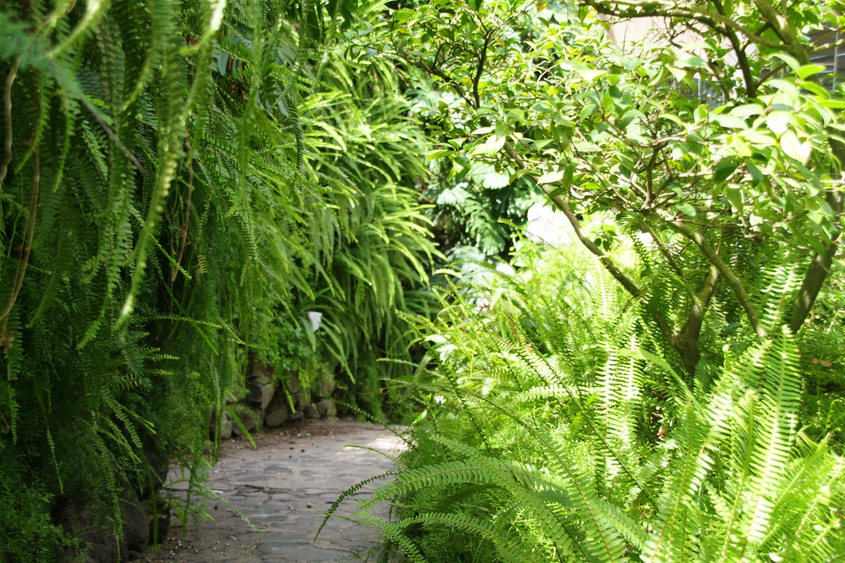 Gardens of Lisbon - Estufa Fria