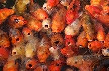 L'Aquarium Vasco da Gama, splendeur marine