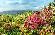La Granja de Hierbas del Arca: Un Jardín Medicinal Mágico