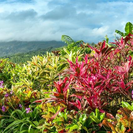 The Ark Herb Farm: A Magical Medicinal Garden