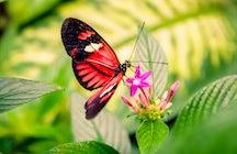 Mainau, une île de papillons et de fleurs