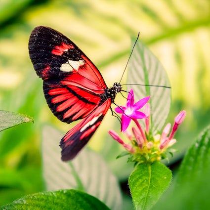 Island of butterflies and flowers: Mainau!