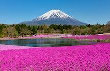 Un césped rosado en el Festival Fuji Shibazakura