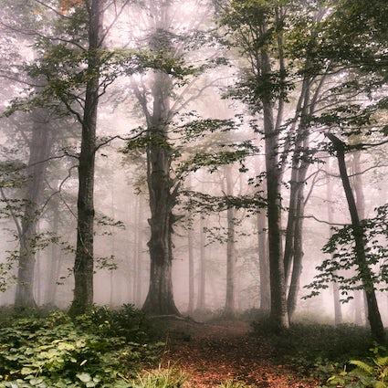 Parque Nacional de Mtirala: en medio de la naturaleza salvaje