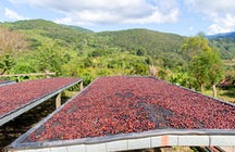 Tour del caffè in Costa Rica