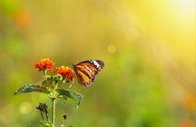 Das Schmetterlingshaus: Erhaltung der Schmetterlinge in Wien