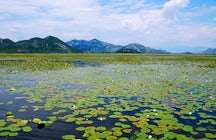 Skadar Lake - a natural jewel of Montenegro