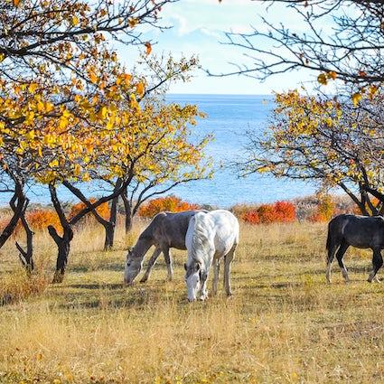 La guía definitiva del lago Issyk-Kul, el ojo de la Tierra