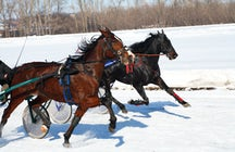 Traditional Lithuania: Race of trotter horses in Sartai