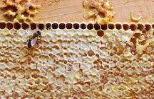 Museo de Apicultura en Radovljica, la capital de la apicultura