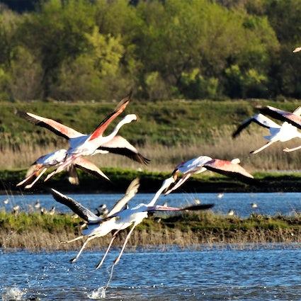 Ulcinj Salina –the Heathrow Airport for the birds