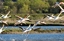 Ulcinj Salina –the Heathrow Airport for the birds