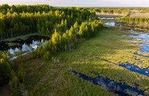 A unique swamp in Lithuania - Čepkeliai Marsh