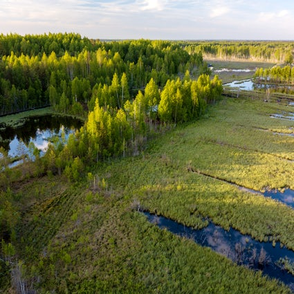 A unique swamp in Lithuania - Čepkeliai Marsh