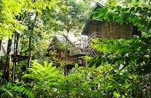 Spend a night in a treehouse in Piedmont