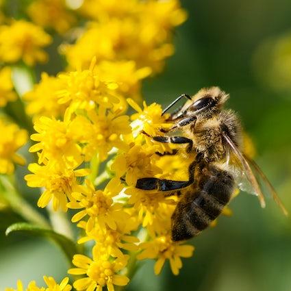 Apitourism: enjoying the bee tourism in Slovenia