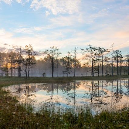 Una joya de la naturaleza cerca de Tallin: Parque Nacional Lahemaa