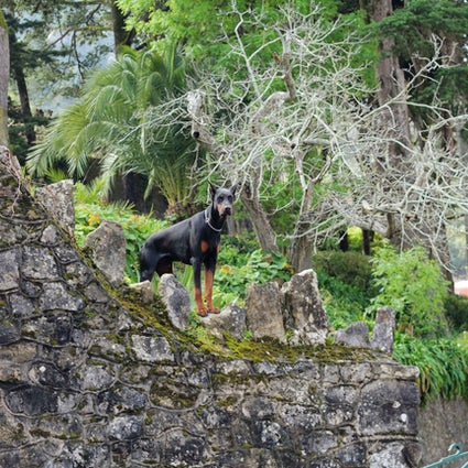 Trekking dans la forêt de Sintra