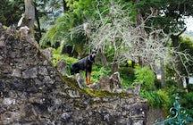 Trekking in the Sintra Woods
