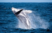 Whale watching off Costa Rican shores