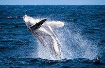 Observation des baleines au large des côtes du Costa Rica