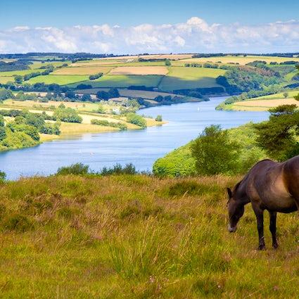 Parco nazionale di Exmoor - bellezza pacifica