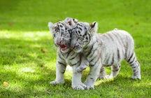 El sueño de un cuidador de zoológico civil se hace realidad en Felsőlajos