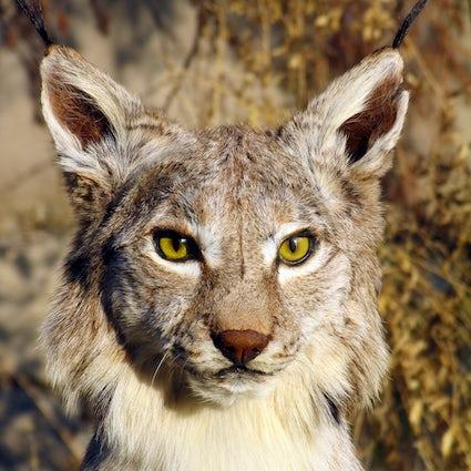 Conozca a los habitantes del Zoológico de Almaty