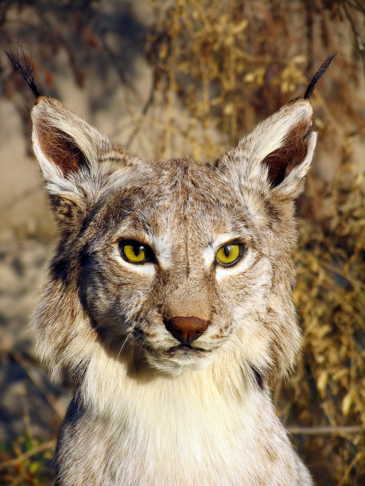 Meet the inhabitants of the Almaty Zoo