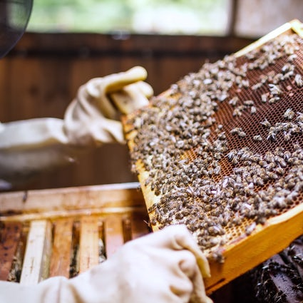Preserving Lithuanian traditions in the Museum of Ancient Beekeeping