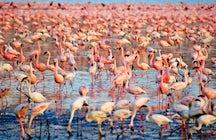"""Flamencos en Cerdeña; una impresionante """"nube rosa"""" sobre los estanques"""