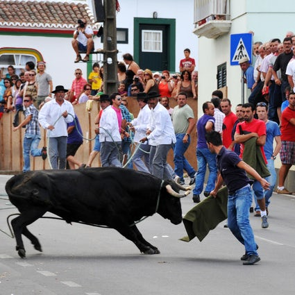 Insane street bullfights of Terceira island