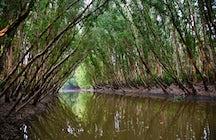 Navegação na floresta Tra Su cajuput, Um Giang