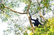 Parque Nacional Cat Tien, Dong Nai: primatas raros e muito mais