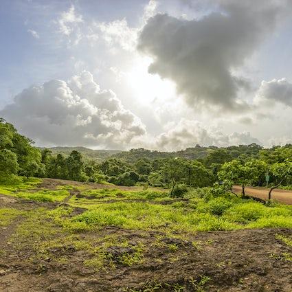Die Natur hautnah erleben im Sanjay-Gandhi-Nationalpark von Mumbai