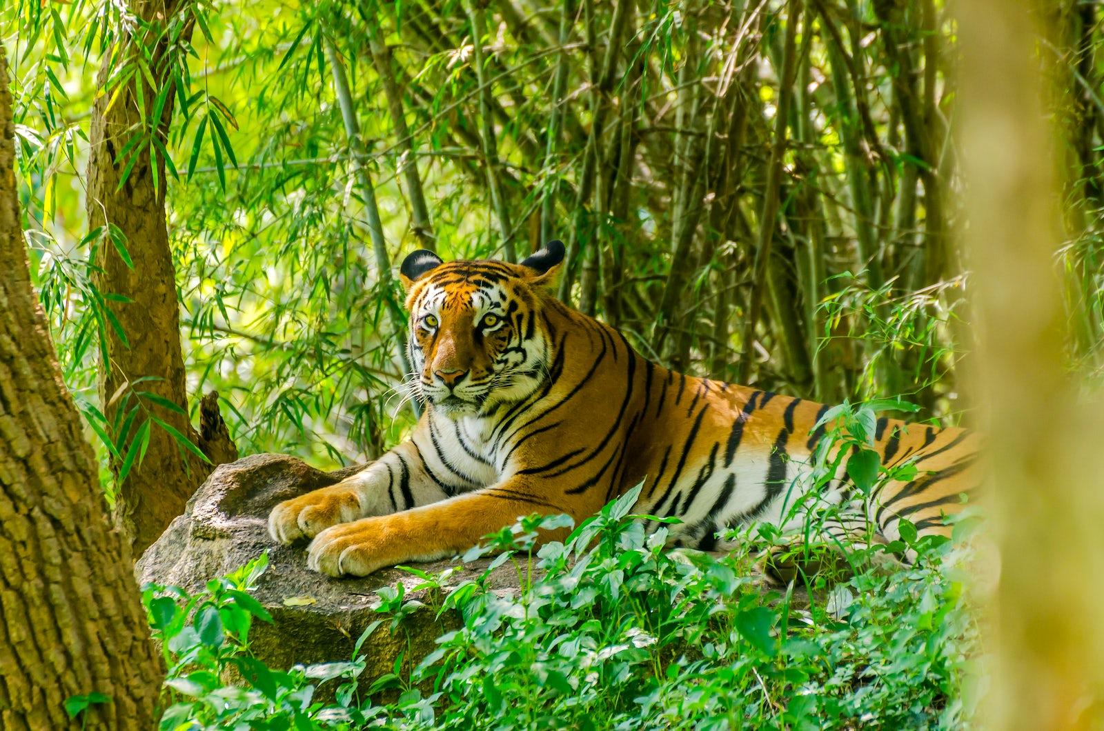 © iStock / Raghu_Ramaswamy
