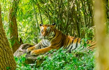 Un weekend nel sereno Sundarbans nel Bengala Occidentale