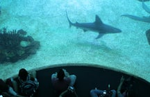 Lisbon Oceanarium - Life Under the Sea