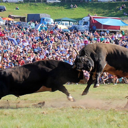 Bullfighting without blood - Bosnian Corridas