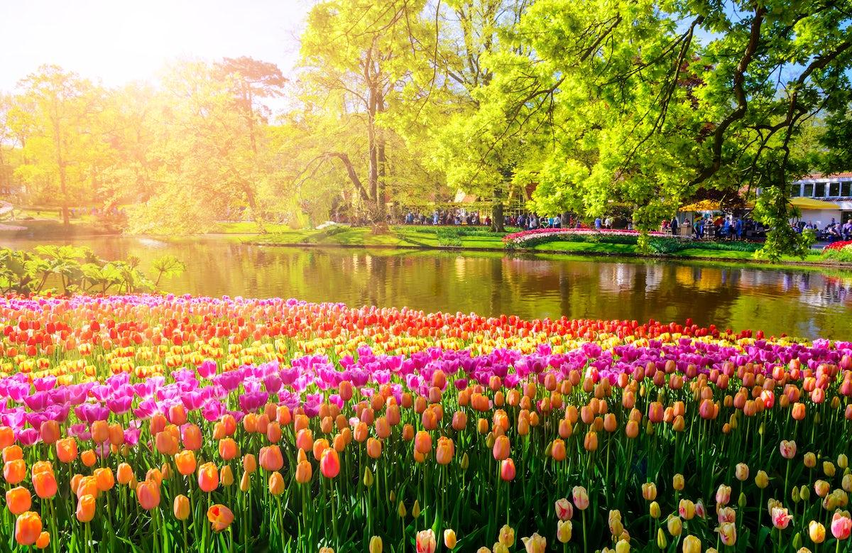 Keukenhof, the Garden of Europe; a flowery experience!