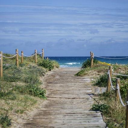 Pine trees and dunes in El Saler Beach, Valencia